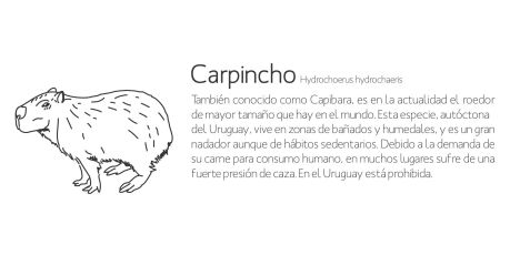 Carpincho