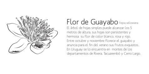 guayabo